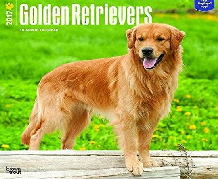Brown Trout Publishers Golden Retrievers 2017 Square Wall Calendar