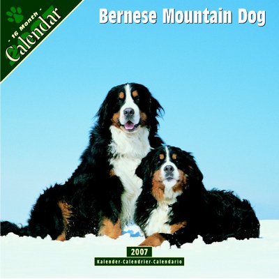 Dog Bernese Mountain Dog 2006 Calendar