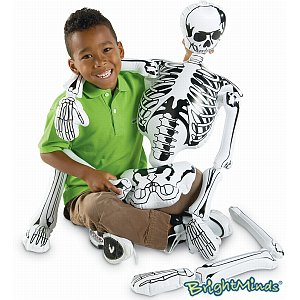 Inflatable Parts Of A Skeleton