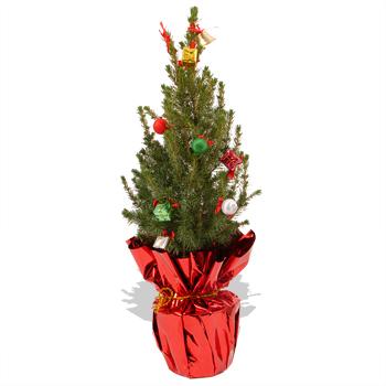 350 x 350 jpeg 54kB, Mini christmas tree flowers flying flowers mini ...