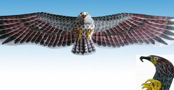3D Desert Eagle Kite Flying Toy & Hobby Outdoor Park Beach Fun Garden Farm Defense Bird Scaring Traditional Chinese Souvenir Art & Handicraft Collectible, Wine Red