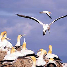 Discover this renowned bird sanctuary on the longest natural spit of sand in the world. It is home t