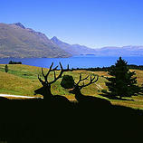 Perfect for the whole family, this tour of The Deer Park high above Lake Wakatipu gives you the oppo