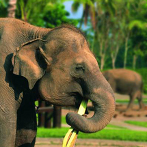 Get up close and personal with these incredible animals at the inspiring Elephant Safari Park. Watch