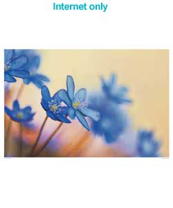 A close up photo of blue flower heads.Artist Info:Frank Krahmer specialises in nature photography an