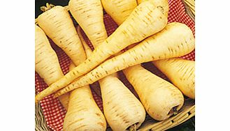 Selected for quality and resistance to Canker  a very good medium-sized parsnip of tapering shape. T