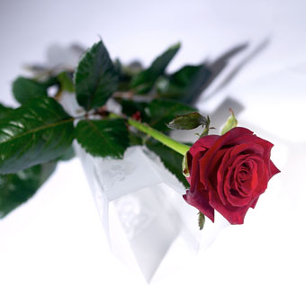 "The image ""http://comparestoreprices.co.uk/images/unbranded/r/unbranded-red-rose.jpg"" cannot be displayed, because it contains errors."