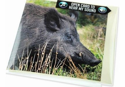 Wild Boar Greeting Card with SoundThis lovely greetings card features a stunning image of a wild boar on the front, photographed by Charles Sainsbury-Plaice, and on the reverse, interesting facts relating to a boar and its habbits.The best aspect of